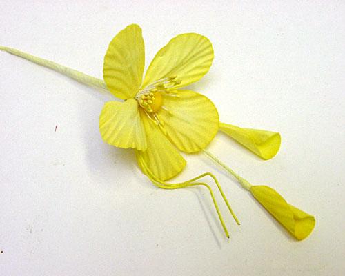 Helleborus Brightly Yellow