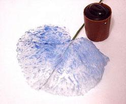 Pearly leaf