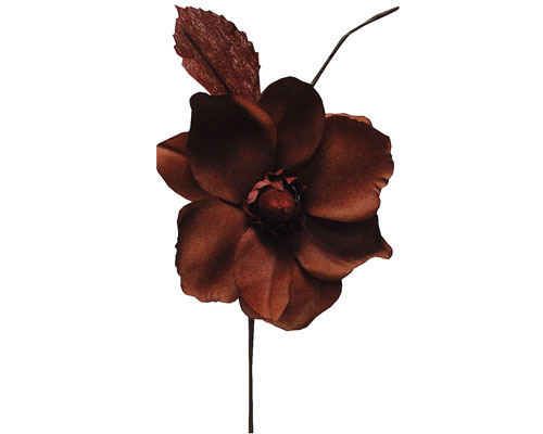 Helleborus, bruin