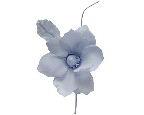 Helleborus, lavendel