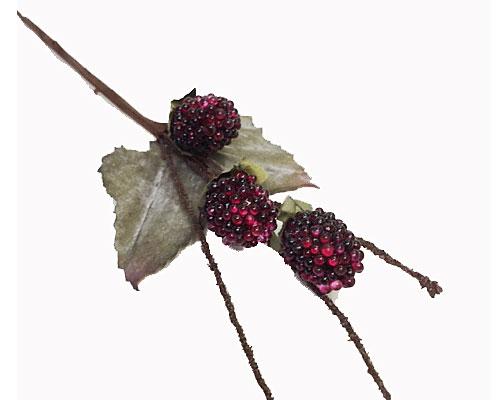 blackberry x3 bordeau